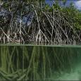 ¡EL MANGLAR ES VIDA, NO MERCANCÍA! Este 26 de julio conmemoramos el Día Internacional para la Defensa del Ecosistema Manglar, fecha que desde 1998 se celebra para reivindicar los derechos […]